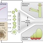 Do Plants Dream of Carbondioxide